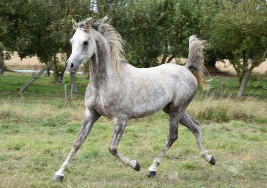 portrait cheval Avalon Initial