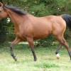 portrait cheval Kalinka El Maklouf