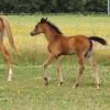 portrait cheval Talia de Bel Air