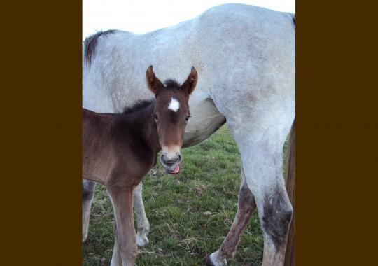 portrait cheval Abysse de Bel Air