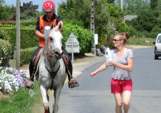 portrait cheval Radjah de Gollodic